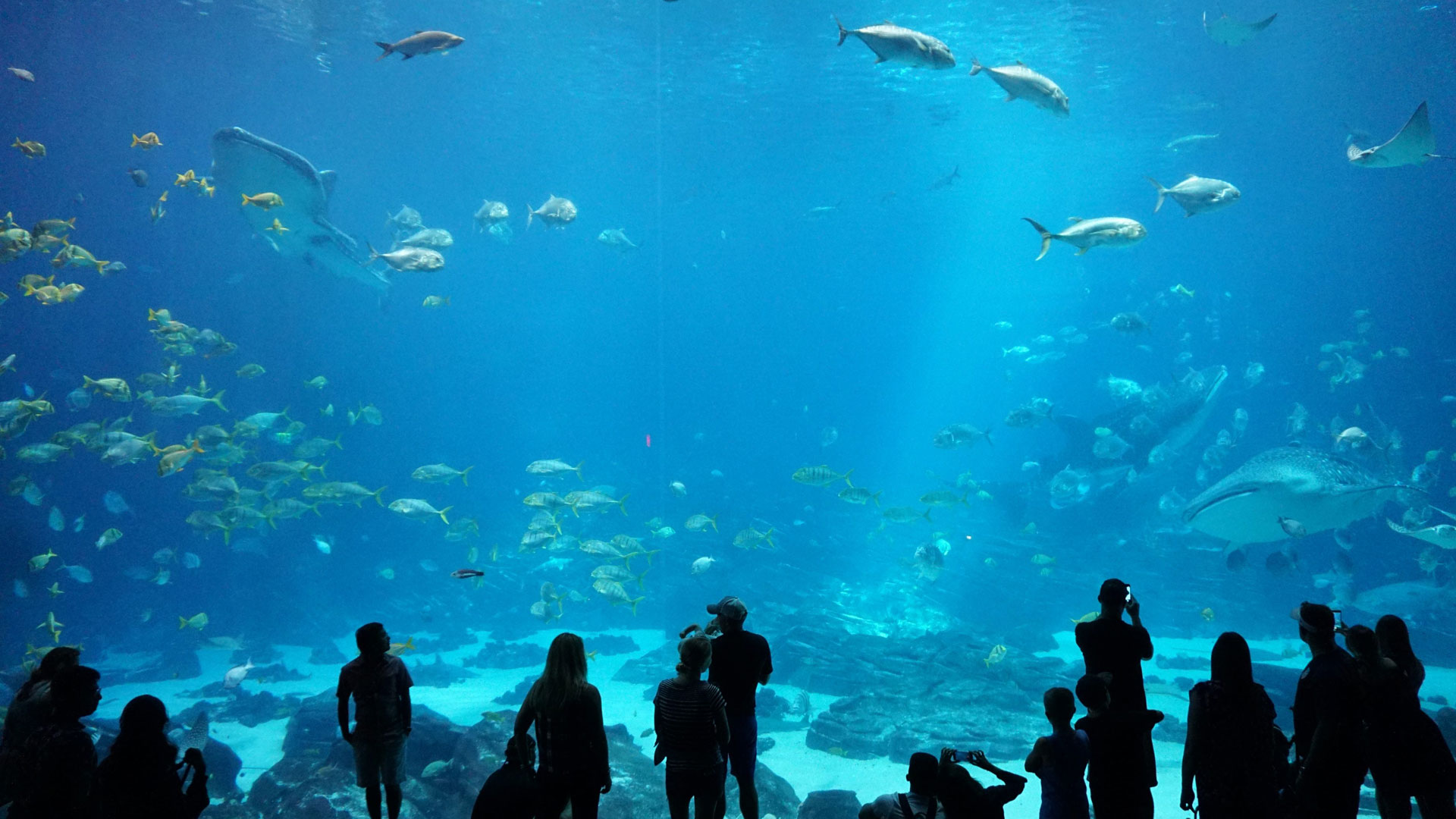 Immotion Sign Partnership With Shedd Aquarium
