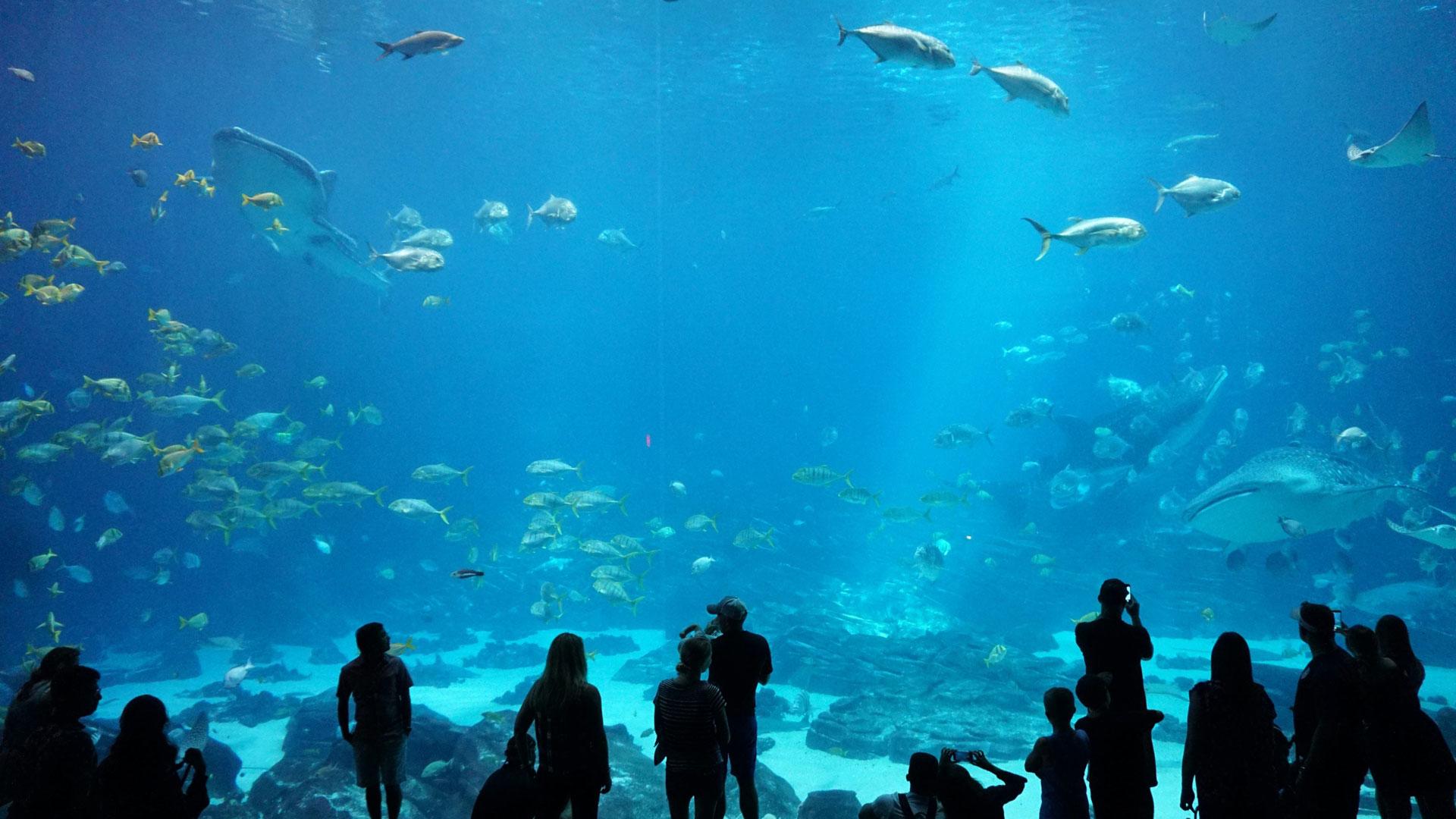 Immotion Sign Partnership With Shedd Aquarium