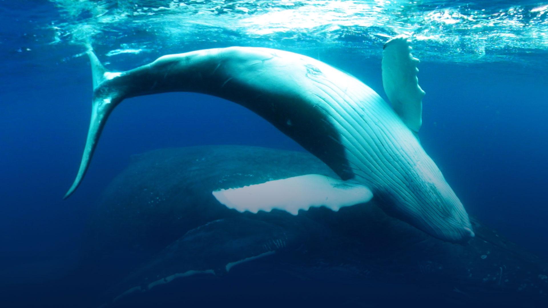 Undersea Explorer de Immotion nos permite nadar con tiburones reales en formato VR si viajamos a Las Vegas