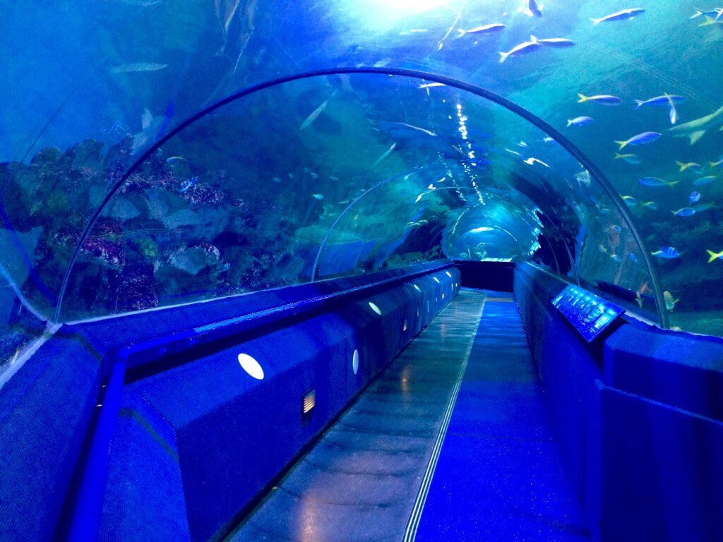 Immotion signs deal with Aspro Parks for Blue Planet Aquarium Cheshire