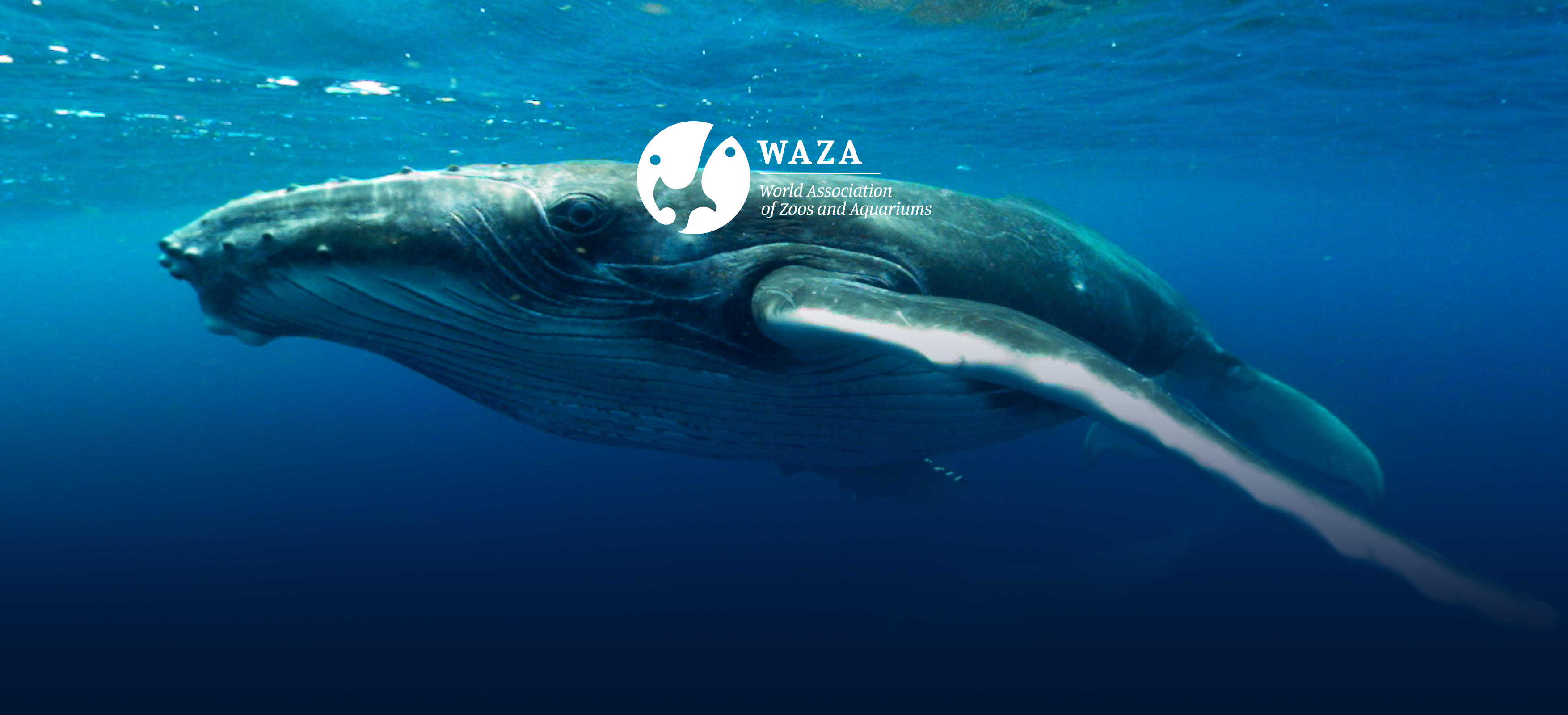 WAZA News – The Science of Immersive Learning